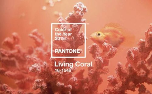 Bright shade of coral is Pantone's Color of the Year 2019