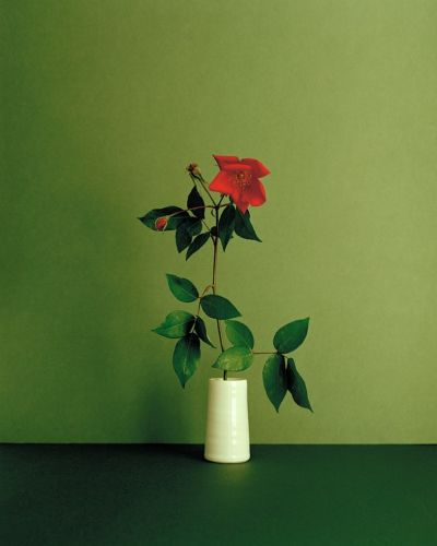 Painterly Photographs of Solitary Flower Stems