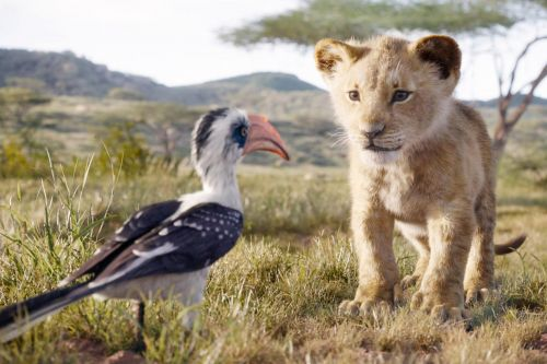 'Lion King' sequel officially in the works with director Barry Jenkins