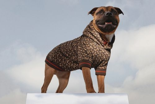 Burberry Unleashes Monogram Dog Hoodie for B Series