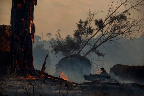 Vogue Believes the Footwear Industry May Be Funding the Brazilian Forest Fires