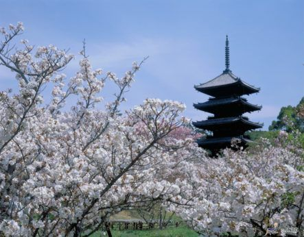 Celebrate Cherry Blossom Season at Hotels Around the World