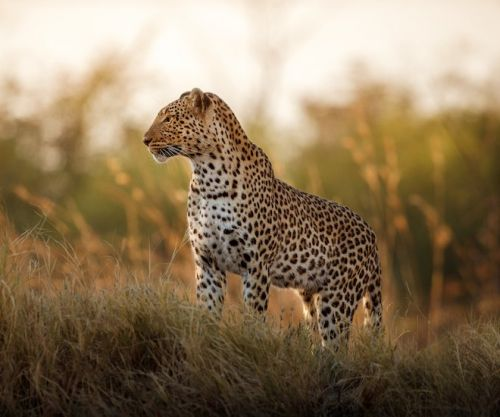 Embark on a Life-Changing Luxury Travel Experience With Ker & Downey Africa